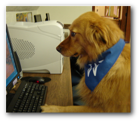 One of the dog playing counterstrike