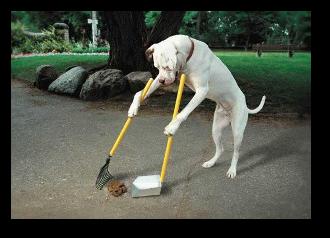 Dog Chores