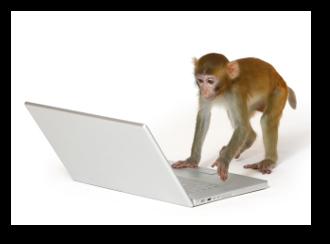 Monkey being Surveyed